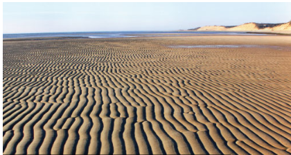 an Image of sand dunes