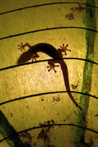 Image of a gecko scaling the inside of a paper lamp.